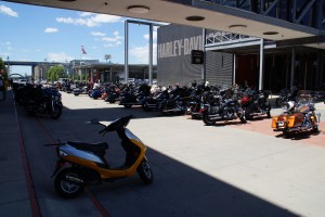 En ensom scooter blandt en masse Harley'ere