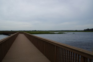 Kan du se tranerne og fiskehejrene