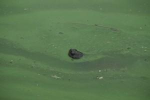 En skildpadde i det grønne