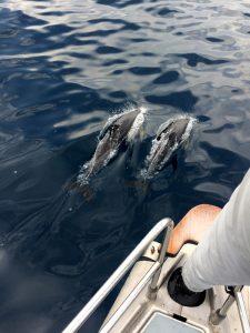 Første møde med delfiner