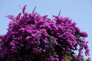 Smukke blomster