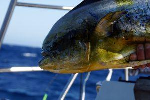 Flot fisk