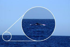 Vi spottede en hval