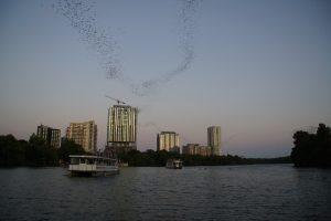 Flagermusene flyver mod øst